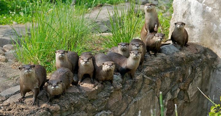 zoo nutrias