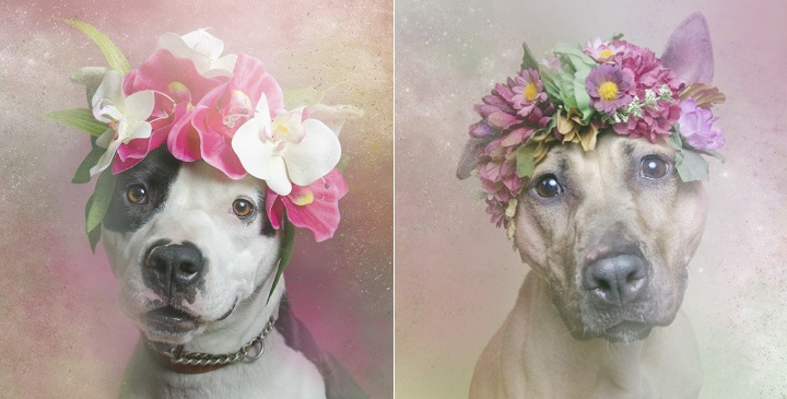 Flower Power pitbulls1
