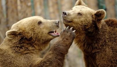 Fotos animales en el zoo1