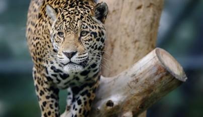 Fotos animales en el zoo5