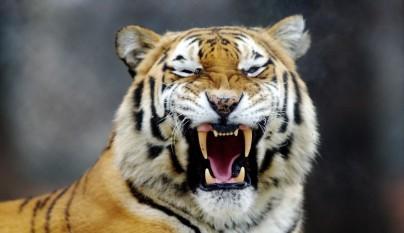 Fotos animales en el zoo9