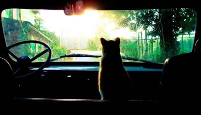 consejos-para-viajar-en-coche-con-gatos1