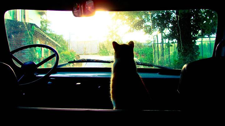 Consejos para viajar en coche con gatos