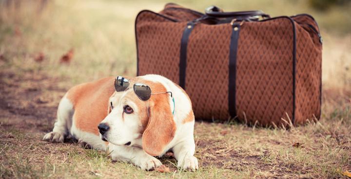 Las mejores ciudades para viajar con perros