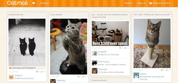 Las mejores redes sociales para gatos que triunfan en Internet