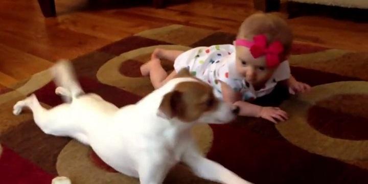 perro ensena a bebe a gatear