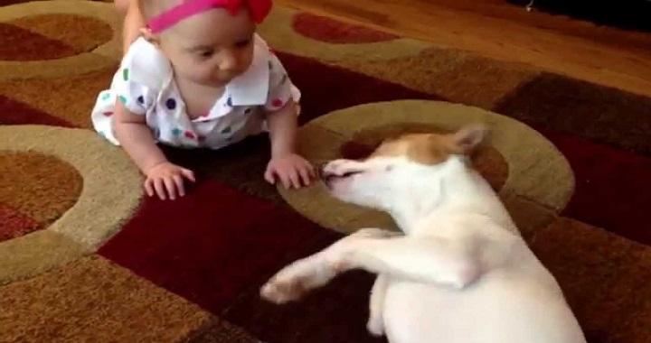 perro ensena a bebe a gatear1