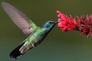 Un hombre salva a un colibrí atrapado en un chicle