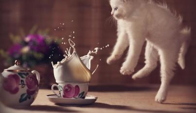 Fotos de gatos saltando1