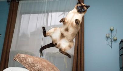 Fotos de gatos saltando10