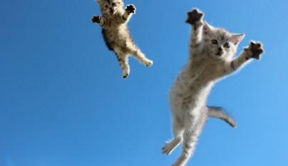Fotos de gatos saltando11