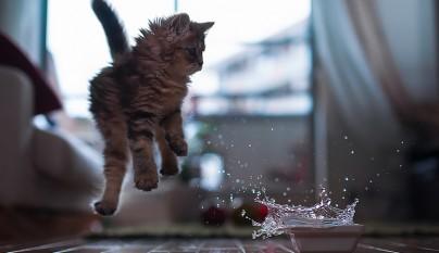 Fotos de gatos saltando12