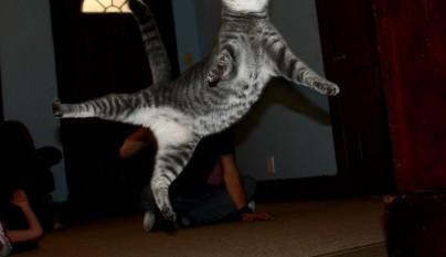 Fotos de gatos saltando13