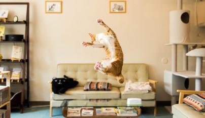 Fotos de gatos saltando14