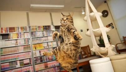 Fotos de gatos saltando15