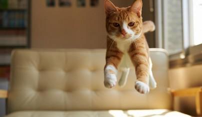 Fotos de gatos saltando3