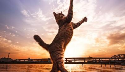 Fotos de gatos saltando4