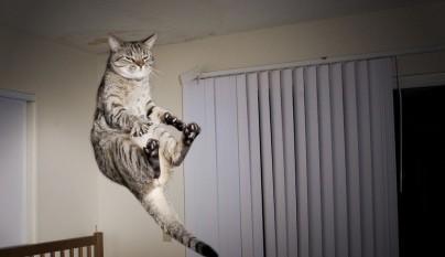 Fotos de gatos saltando6