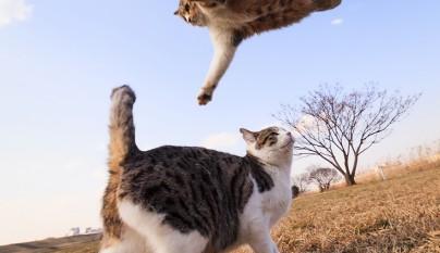 Fotos de gatos saltando7