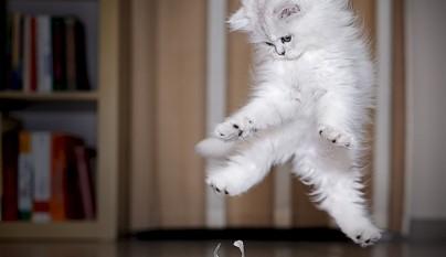 Fotos de gatos saltando8