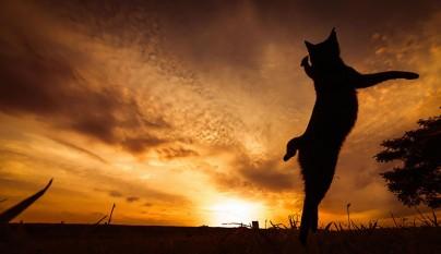 Fotos de gatos saltando9