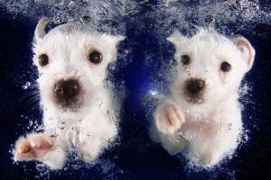 Fotos de cachorros bajo el agua
