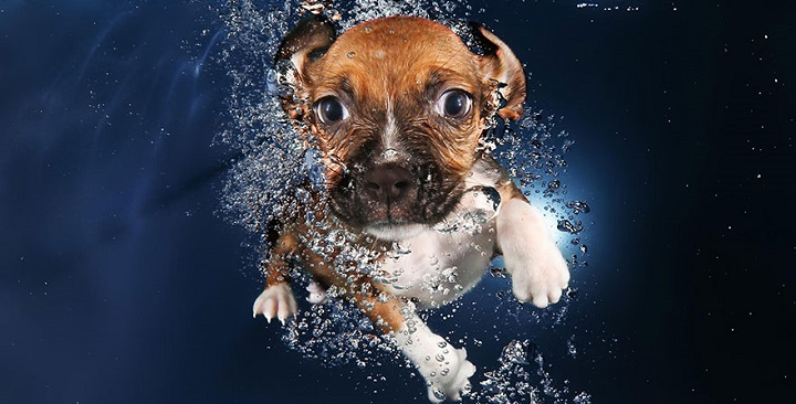 Fotos de perros bajo el agua1