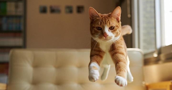 Fotos gatos saltando