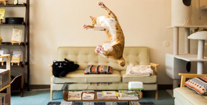 Fotos gatos saltando1