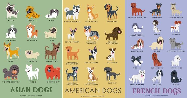 Lili Chin origen perros