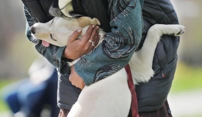 Perros abrazando humanos10