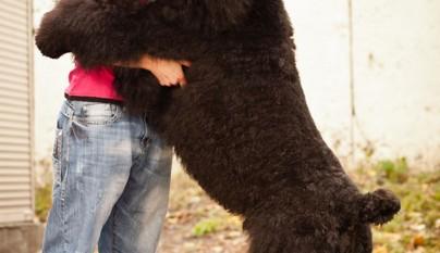 Perros abrazando humanos12