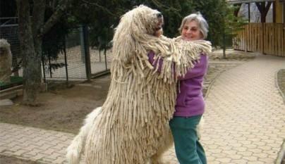 Perros abrazando humanos15