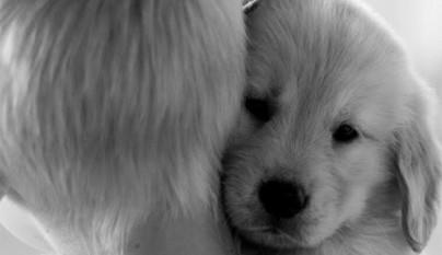 Perros abrazando humanos24