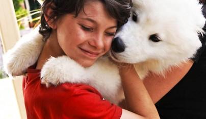 Perros abrazando humanos4