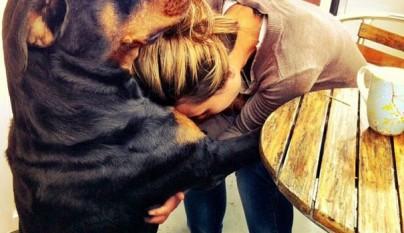 Perros abrazando humanos5