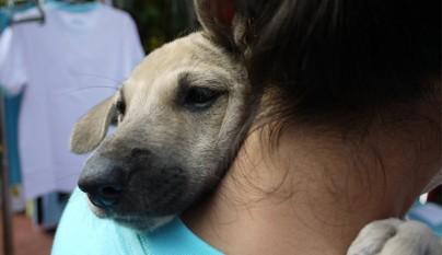 Perros abrazando humanos9