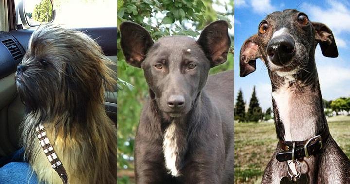 Perros parecidos razonables
