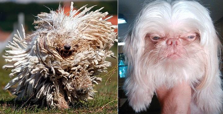 Perros parecidos razonables1