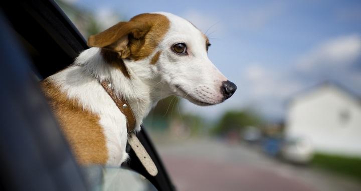 Taxi para perros Barcelona