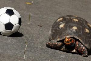 Divertidas imágenes de un perro jugando al fútbol con una tortuga