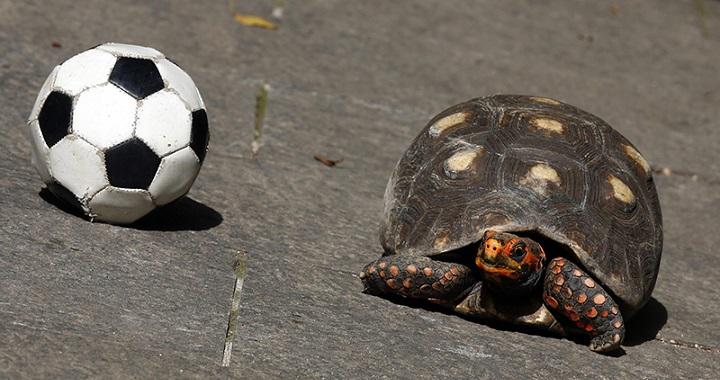 Tortuga jugando a futbol con un perro