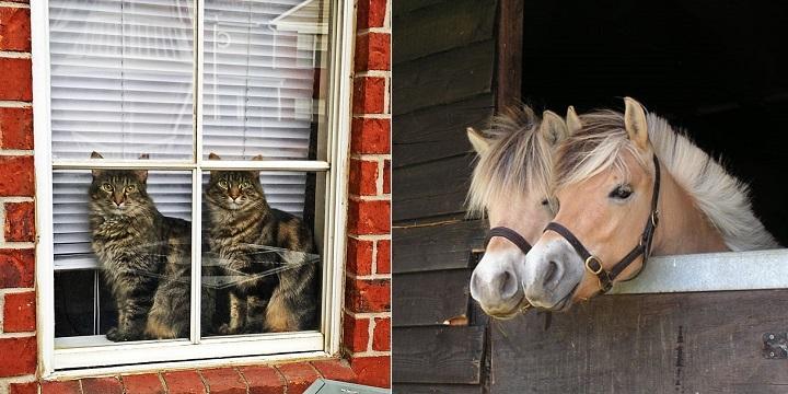 Animales parecen gemelos1