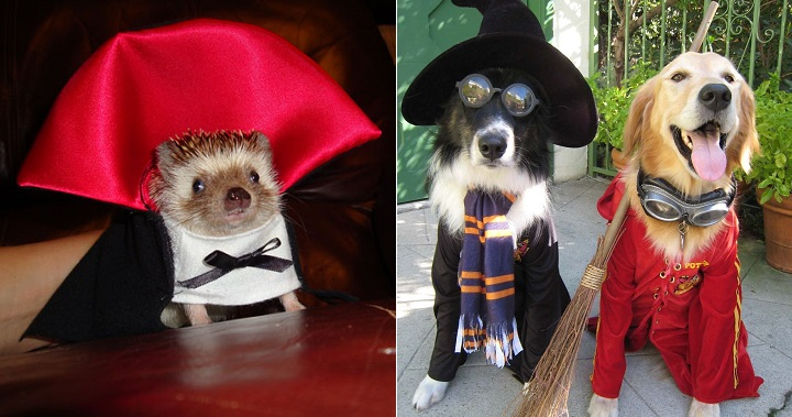 Disfraces animales Halloween
