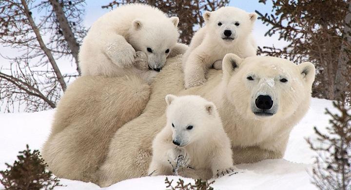 Fotos animales familia