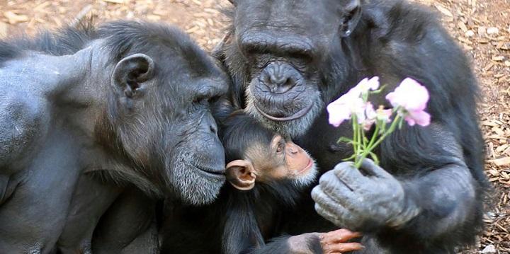 Fotos animales familia1