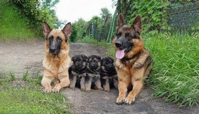 Fotos de animales con su familia10