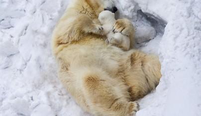 Fotos de animales con su familia14