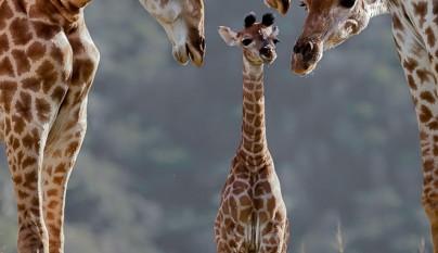 Fotos de animales con su familia15