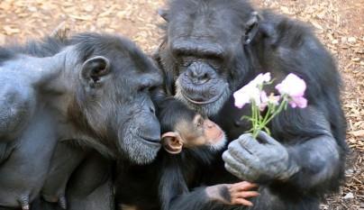 Fotos de animales con su familia17